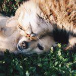 【当たる心理テスト】猫度犬度はどれくらい?