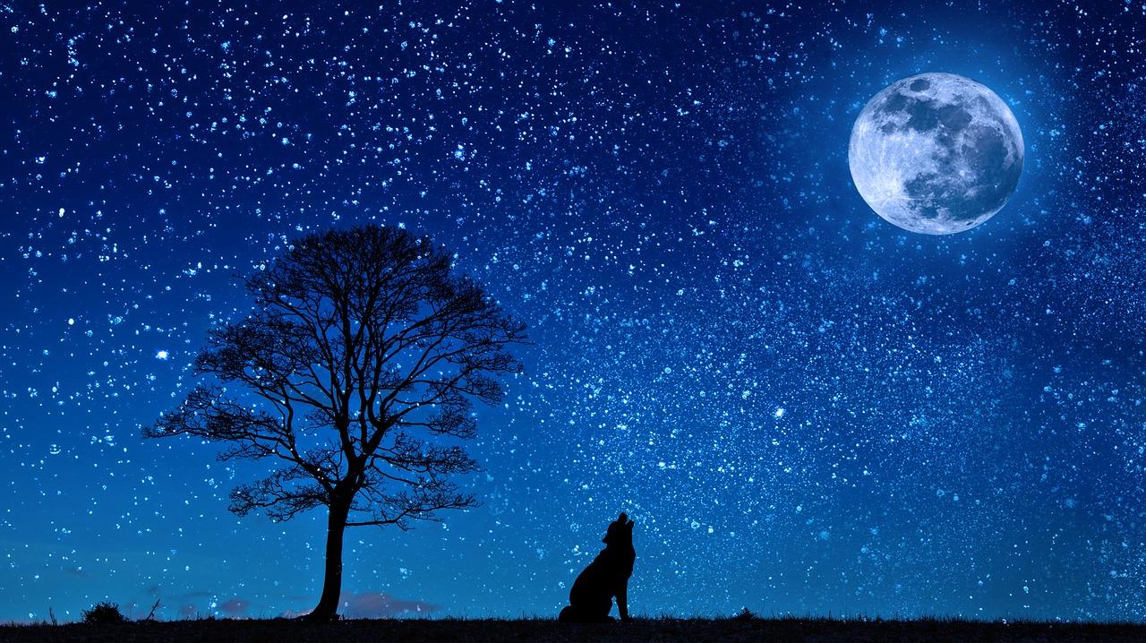 何時 満月 今日 の 冷える夜 晴れた夜空に「今年最小」「46年ぶりのハロウィン」の満月(気象予報士